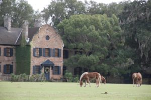 middleton place horse