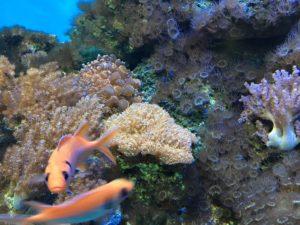 sarkanniemi aquarium