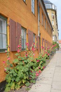 copenhagen street flower 2