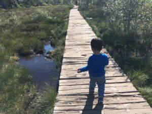 preikestolen baby walk