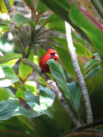 Hawaii tropical botanical garden bird