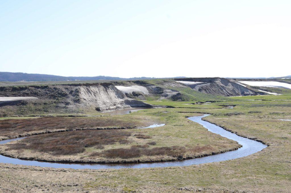 yellowstone grass land
