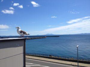 海鳥と国後島