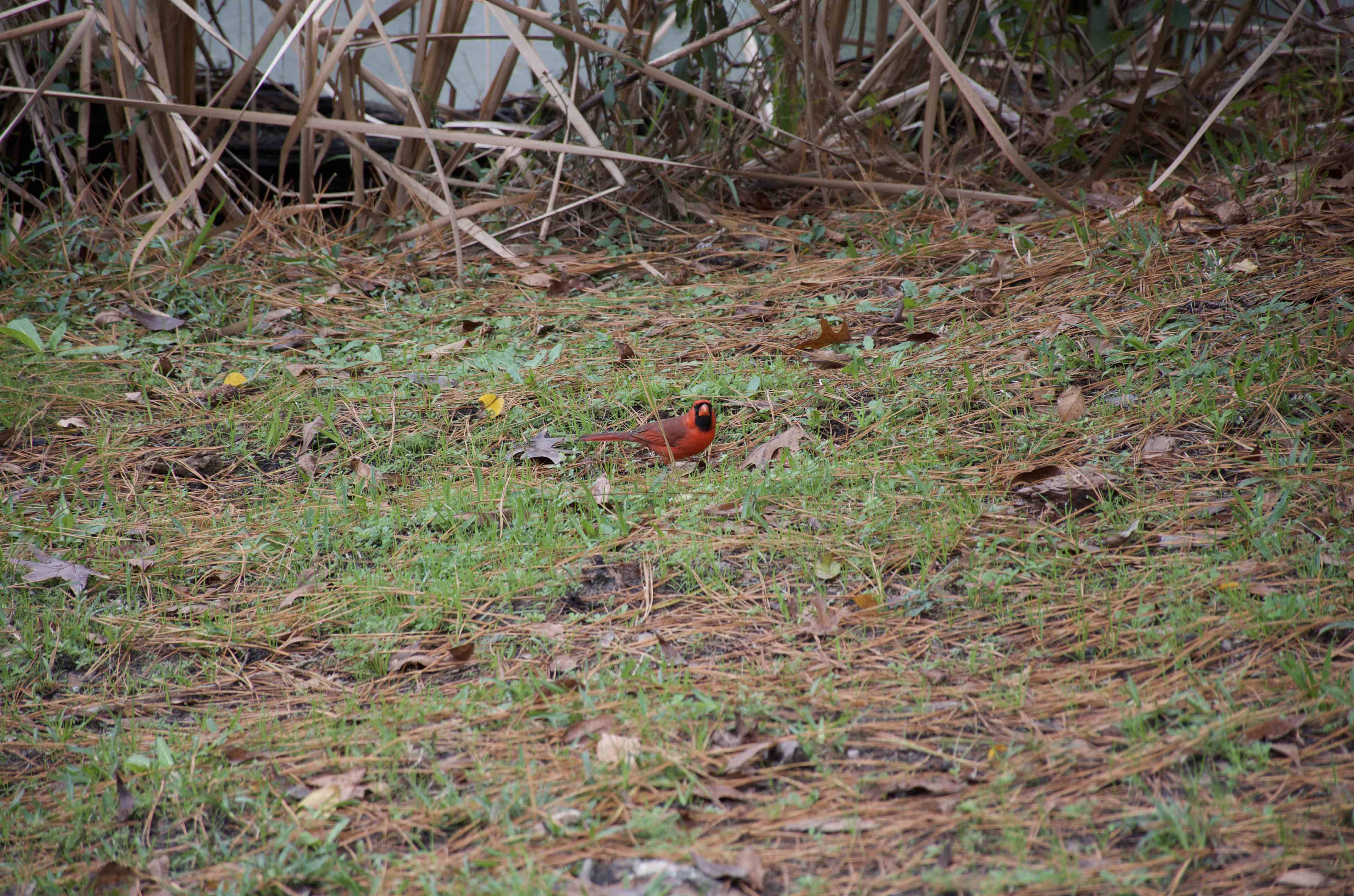 ミドルトンプレイス 野鳥