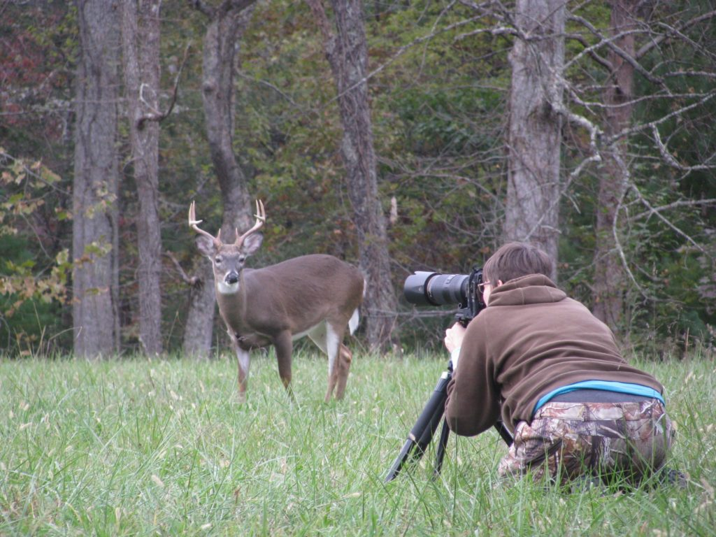 ケイズコーブの鹿2