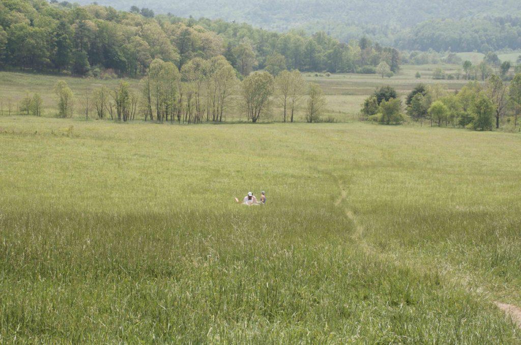 ケーズコーブの草原と森林