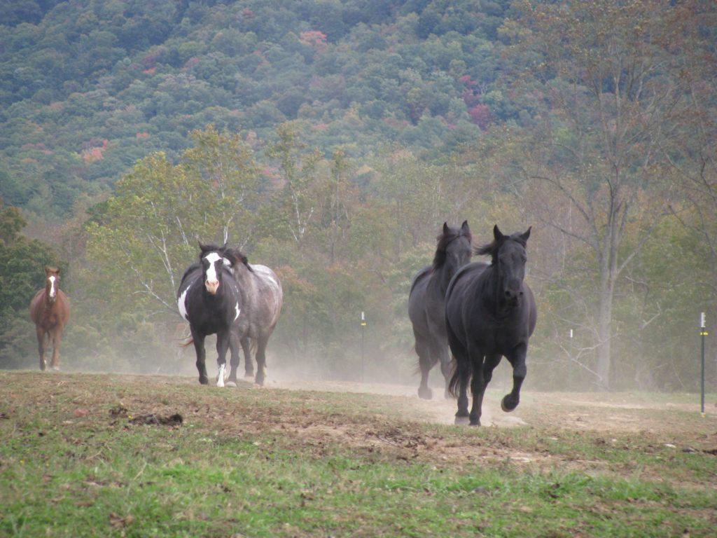 ケイズコーブの馬