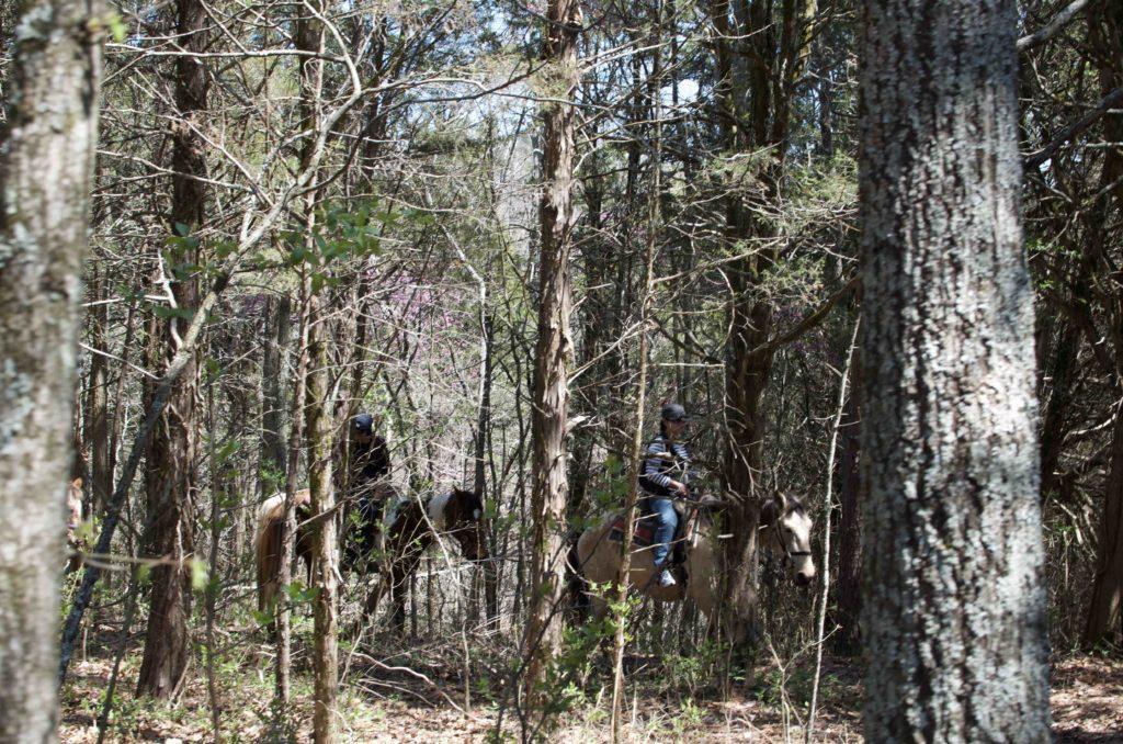 森の中の乗馬体験