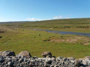 35号線沿いでのんびりと過ごす羊