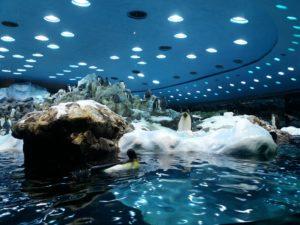 ロロパークのペンギン館