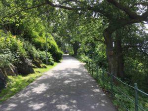 夏のノルウェーの公園の小道